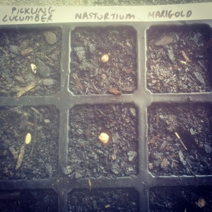 Labelled Seeds 1