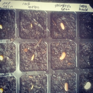 Labelled Seeds 2