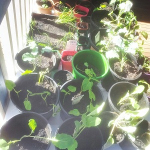 Pile of Repotted Plants