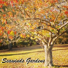 {Exploring Victoria} SeawindsGardens